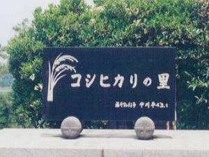 コシヒカリ3